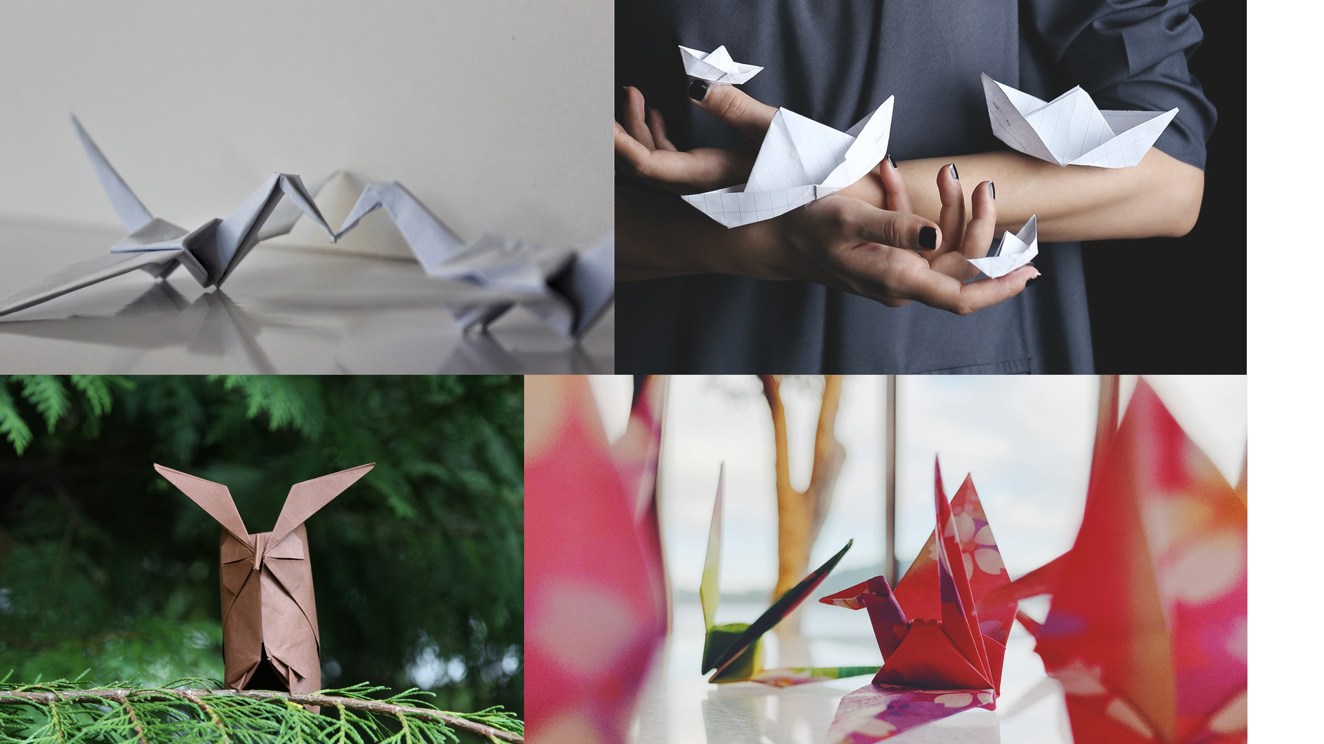 Origami competition