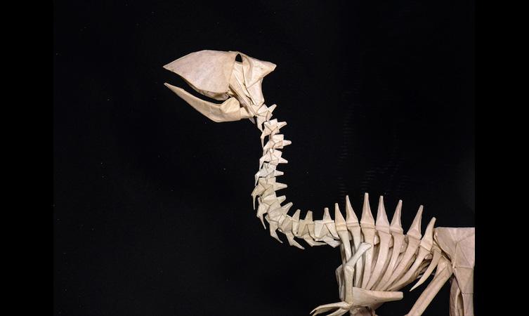 Gastornis Skeleton – Origami